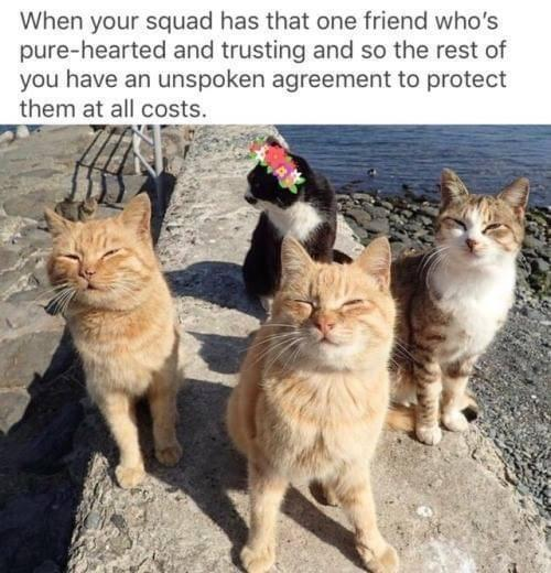 Wholesome memes, Orange Boys, New Girl, Dreamcatcher Wholesome Memes Wholesome memes, Orange Boys, New Girl, Dreamcatcher text: When your squad has that one friend who's pure-hearted and trusting and so the rest of you have an unspoken agreement to protect them at all costs.