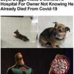 other memes Funny, Futurama, Hachiko, COVID, Seymour, Fry text: Loyal Doggo Waits 3 Months At Hospital For Owner Not Knowing He Already Died From Covid-19 nd now, you have officially carriéd it too far Budd .  Funny, Futurama, Hachiko, COVID, Seymour, Fry