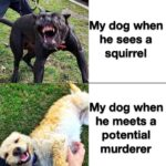 other memes Funny, Morty, Ellie text: My dog when squirrel VMy dog when he meets a potential murderer  Funny, Morty, Ellie