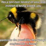 Wholesome Memes Cute, wholesome memes, Pretty, Bob, Bees text: Has a bee ever landed on you—and— instead of being scared, you appreciate the possibility that you got confused (pra flow.  Cute, wholesome memes, Pretty, Bob, Bees