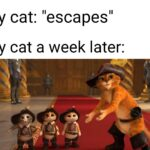 "other memes Dank, Visit, Feedback, WgXcQ, Searched Images, Search Time text: My cat: ""escapes"