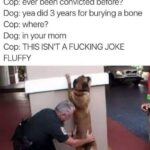 other memes Dank,  text: Cop: ever been convicted before? Dog: yea did 3 years for burying a bone Cop: where? Dog: in your mom Cop: THIS ISN