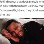 Wholesome Memes Wholesome memes,  text: Me finding out that dogs sneeze when we play with them to let us know that it