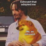 """Wholesome Memes Wholesome memes, Helping text: Extrovert that adopted me """"•Me, an introvert  Wholesome memes, Helping"""