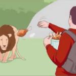 Throwing food at lion Stock Photo meme template blank  Stock Photo, Vs, Food, Lion, Animal, Throwing