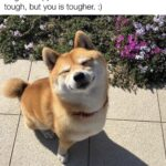 Wholesome Memes Wholesome memes, Doge text: Doge is happi because life sometimes be tough, but you is tougher. :)  Wholesome memes, Doge
