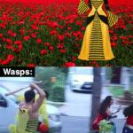 other memes Funny, Wasps, Zane, Halloween, Florida Man, Florida text: Bees: Wasps:  Funny, Wasps, Zane, Halloween, Florida Man, Florida