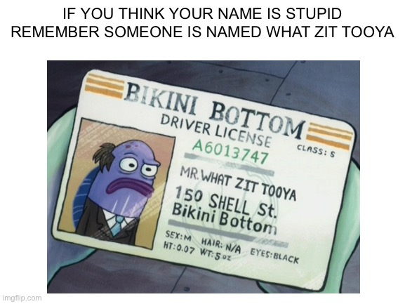Spongebob, Mr, Spongebob, Zit Tooya, DOB, Patrick Spongebob Memes Spongebob, Mr, Spongebob, Zit Tooya, DOB, Patrick text: IF YOU THINK YOUR NAME IS STUPID REMEMBER SOMEONE IS NAMED WHAT ZIT TOOYA DRIVER • 6013747 ccnss: s Iso SHELL st. HAIR: imgfiipcom
