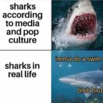 Wholesome Memes Wholesome memes, Jaws text: sharks according to media and pop culture sharks in real life •ip$na doa swim blub blub  Wholesome memes, Jaws