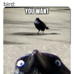 other memes Dank,  text: bird:sings to attract female me:repeats what it said bird: YOU WANT SOME FUK  Dank,