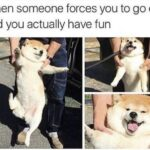 Wholesome Memes Wholesome memes,  text: When someone forces you to go out and you actually have fun  Wholesome memes,