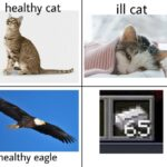 other memes Funny, Wait, Minecraft, Iron, Eagle, WAIT text: healthy cat healthy eagle ill cat  Funny, Wait, Minecraft, Iron, Eagle, WAIT