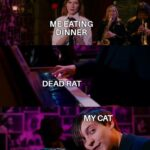 other memes Funny, Spiderman, Spider-Man, Raimimemes text: DEA RAT MY CAT —v-This one