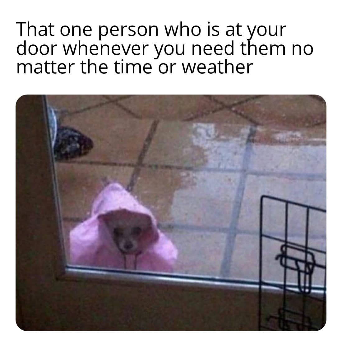 Wholesome memes, Theyre Wholesome Memes Wholesome memes, Theyre text: That one person who is at your door whenever you need them no matter the time or weather