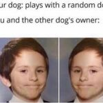 Wholesome Memes Wholesome memes,  text: your dog: plays with a random dog you and the other dog