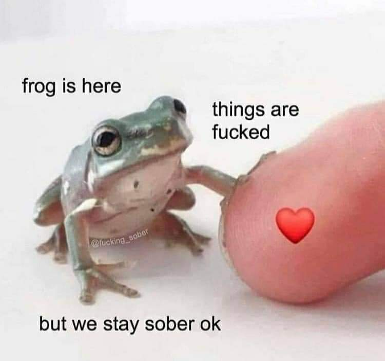 Wholesome memes, Toady, Thanks, Deal Wholesome Memes Wholesome memes, Toady, Thanks, Deal text: frog is here things are fucked but we stay sober ok
