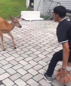 Playing basketball against deer Black Twitter meme template