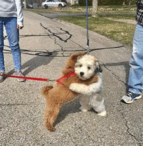 Dogs hugging Hugging meme template