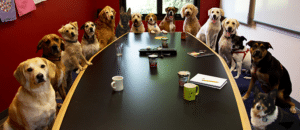 Dogs at meeting table Meeting meme template